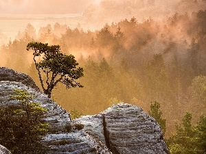 rocks, forest, Fog, trees