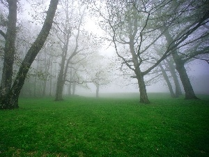trees, grass, Fog, viewes