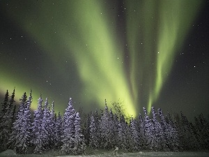 winter, aurora polaris, forest