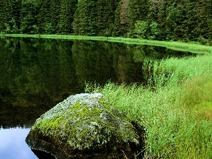lake, grass, forest, Stone