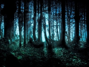 scary, forest