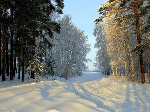 forest, winter, Way