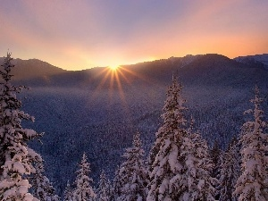 forest, winter, sun, Mountains, rays