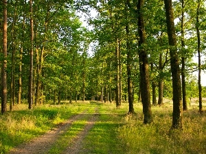 grass, Path, trees, viewes, forest