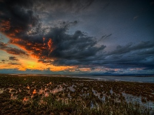 clouds, swamp, Great Sunsets