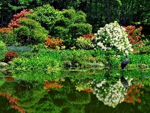 Flowers, green, heron, Park, birds, Pond, Garden, Spring