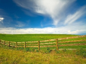 green ones, Spring, wooden, Fance, field, Extensive
