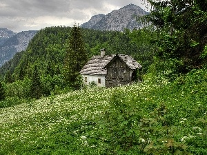 Home, Flowers, woods, Meadow, Mountains