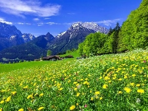 Mountains, Meadow, Houses, Spring, woods, Flowers