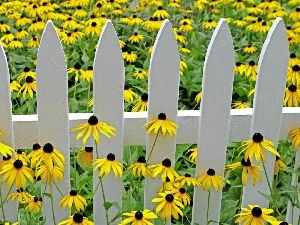 Hurdle, Meadow, Rudbeckia