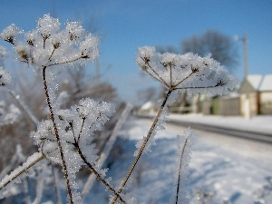 inflorescences, stems, Plants, radial, frozen