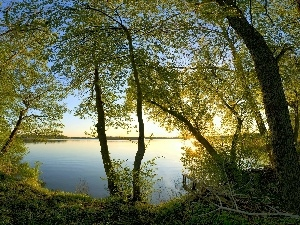 trees, branch pics, lake, viewes