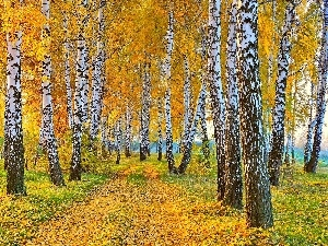 Leaf, autumn, birch, Way, forest