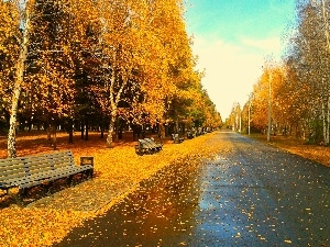 Leaf, autumn, trees, viewes, Park