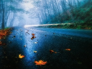 Leaf, autumn, forest, Fog, Way