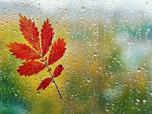 Glass, Autumn, leaf, Rain