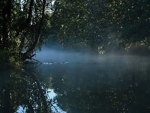 River, birch-tree, Leaf, Fog