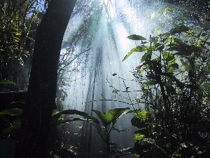 light, jungle, rays
