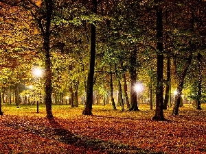 lighting, Autumn, Park