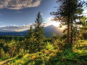 rays of the Sun, forest, Mountains
