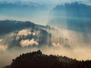 Mountains, woods, sun, Fog, rays