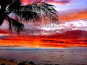 Great Sunsets, sea, Palm