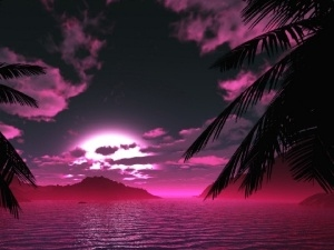 Palms, water, west, sun, Pink