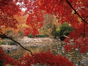 Red, trees, Park, Leaf