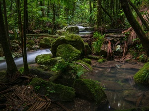 Rainforest, Australia, stream, Stones, Palms, Nightcap National Park