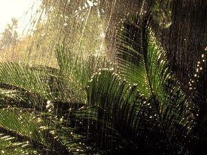 jungle, Rain, Plants, rainy