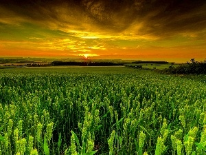 west, field, Plants, sun