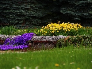 purple, Stones, Flowers, Yellow, Garden
