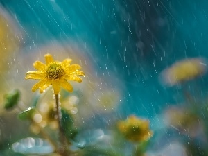 Rain, Yellow, Flower
