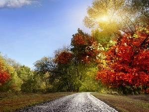 viewes, color, sun, trees, Way, rays, autumn