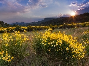 woods, Flowers, sun, Mountains, Meadow, rays, clouds