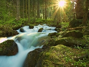 waterfall, rays of the Sun, River, forest