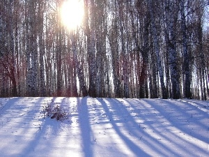 snow, forest, rays of the Sun