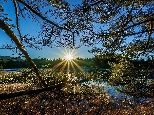 rays, sun, trees, viewes, River
