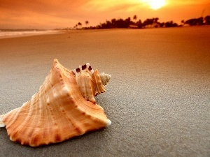 sea, shell, Beaches