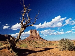 arid, canyon, Sky, trees