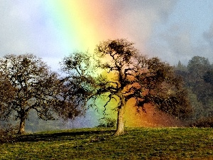trees, Great Rainbows, Sky, viewes