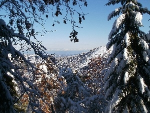 Mountains, viewes, snow, trees