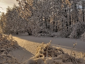 Bush, trees, rays, viewes, forest, snow, sun