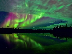 aurora polaris, forest, star, lake