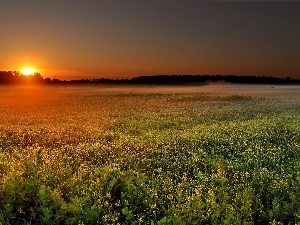 Floral, The setting, sun, Meadow