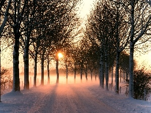 viewes, Way, sun, snow, Fog, trees