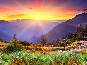 Spring, rays, sun, Mountains