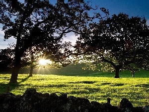 trees, grass, sun, viewes