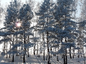 viewes, forest, sun, winter, rays, trees