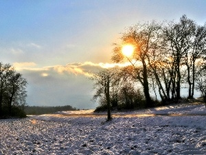 woods, Way, sun, winter, rays, field